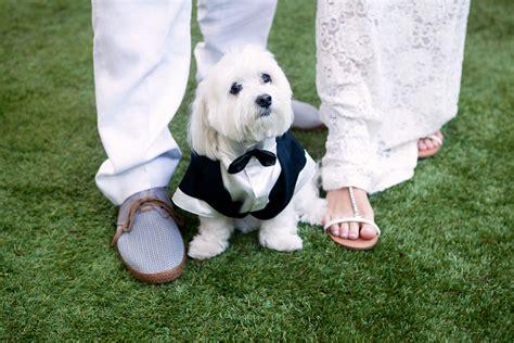 budget wedding photographers los angeles la budget wedding photographer affordable wedding photography 310 745 4417