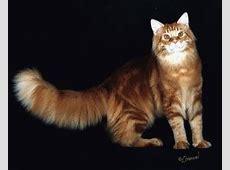 Animierte Tier Gifs: Katzen - Gif-Paradies Flaggen Der Welt