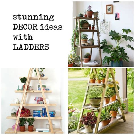 catalog home decor shopping indoor plants that purify air in living spaces even though