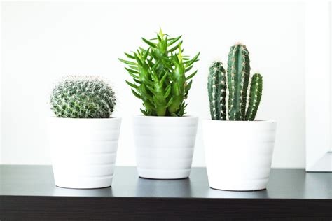 26 Great Bathroom Storage Ideas by Ikea White Potted Cacti Google Search Style Stack