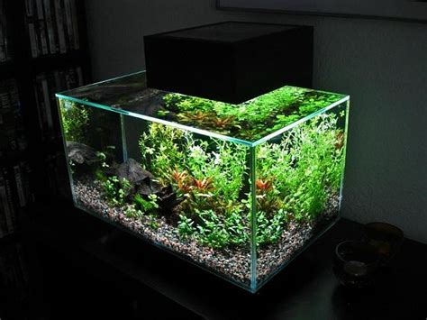 fluval edge aquascape pin by meghan genovese on home and garden pinterest