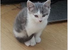 Very cute fluffy kittens for sale | Chelmsford, Essex ... Kittens For Sale