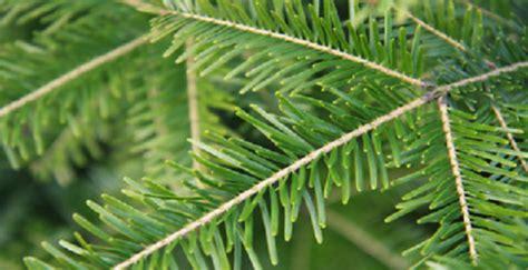 christmas trees denny wiggers paramus nj