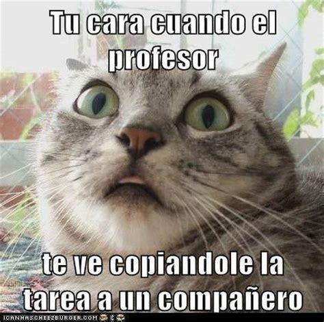 imagenes hipster graciosas imagenes y memes chistosos de gatos imagenes chistosas