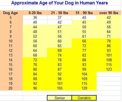 what age is a puppy age how is your in human years