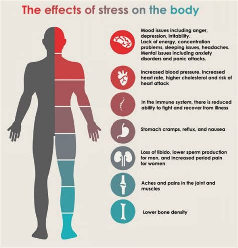 the healing cooker lower stress improve gut health decrease inflammation books the effect of stress on your executive medicine