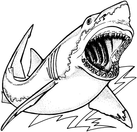 Great White Shark Coloring Pages To And Print For