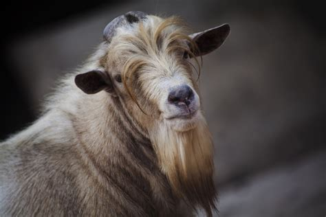 here is a list of 10 extremely good goat beards modern