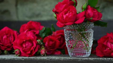 ciri ciri bunga mawar jenis  maknanya  jarang