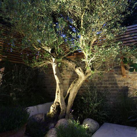 outdoor garden with olive tree and rocks garden garden