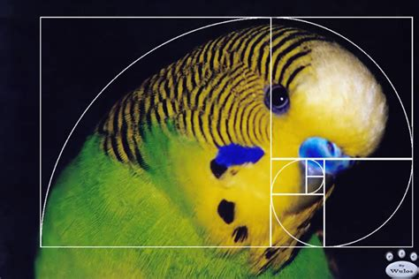 number pattern found in nature fibonacci sequence on emaze