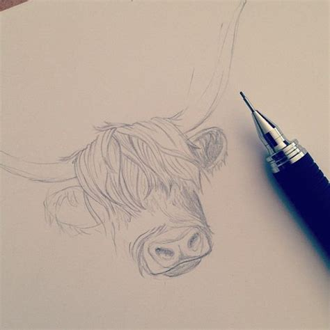 highland tattoo sketch of janice our highland cow in the works for a new