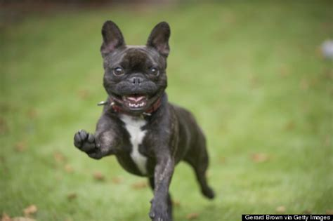 excited puppy image gallery excited