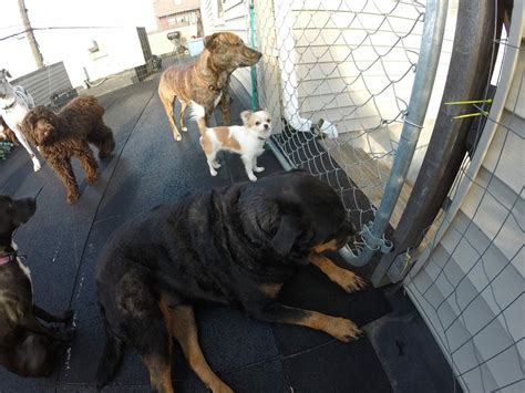 The Dog House 13 Billeder 19 Anmeldelser Hundeluftere 1255 N Main St Summit