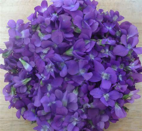 violet purple april 2013 auntie dogma s garden spot page 15