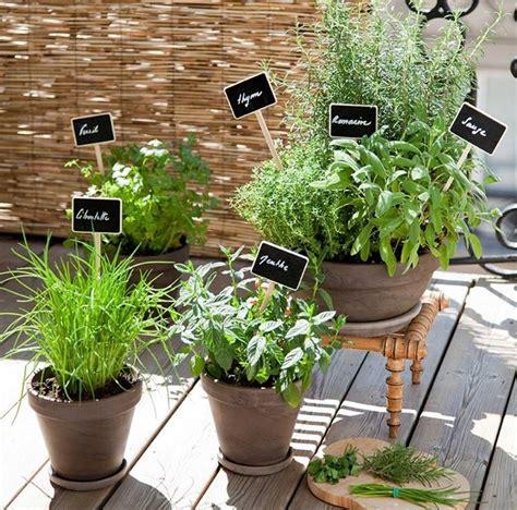 piante da orto in vaso piante aromatiche in casa orto coltivare piante