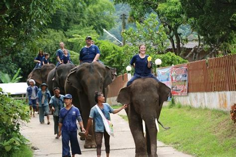 thai elephant home mae taeng thai elephant home