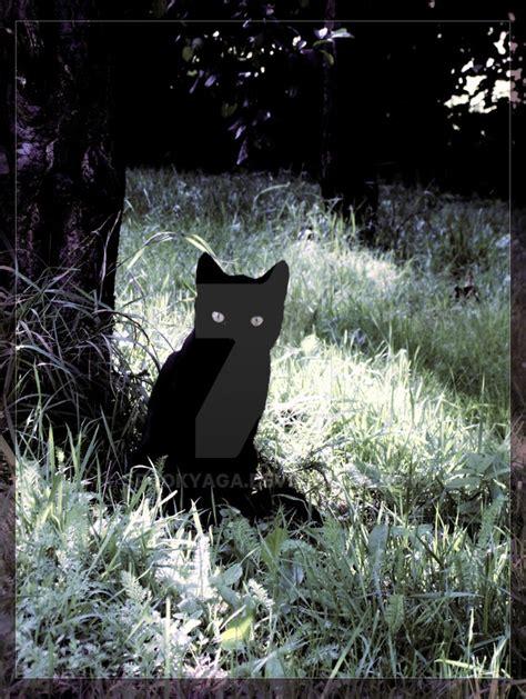 magic cat magic cat by spookyaga on deviantart