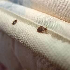 bed bug website x terminators pest control identifying your pest