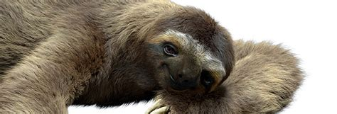 sloth on a couch how a london vfx studio is ditching desktop workstations
