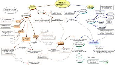 testo sull inquinamento mappe per la scuola apparato riproduttore