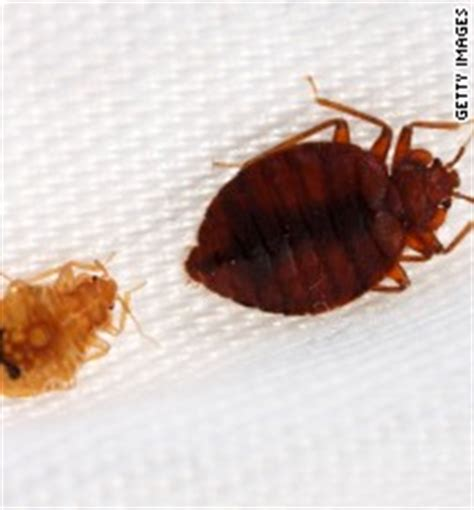 bed bugs color bedbugs have favorite colors too study finds cnn com