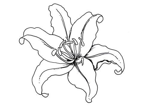 coloring pages of different types of flowers plantillas de flores para colorear