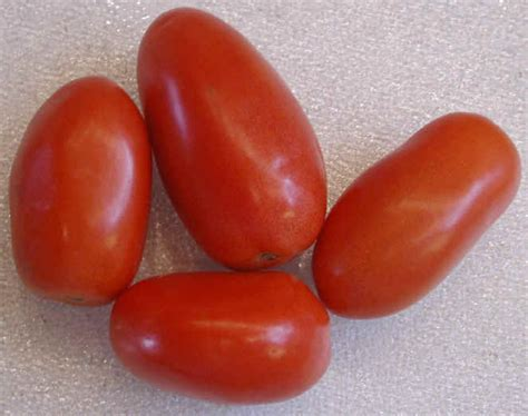 Plumb Tomato by Roma Tomatoes Italian Or Plum Ingredients Descriptions