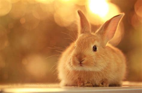 cute bunny pictures weneedfun
