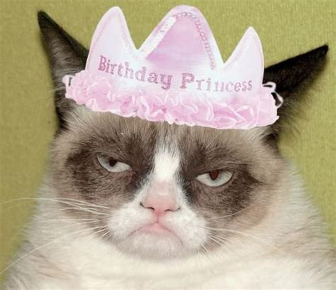 grumpy cat party ideas one charming party birthday grumpy cat bday princess jpg grumpy cat blank