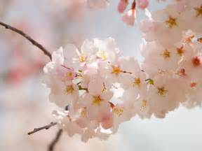 image of spring flowers amazing spring flowers wallpapers 521 entertainment world