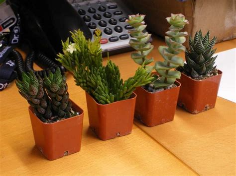 office plants  workers  productive business insider