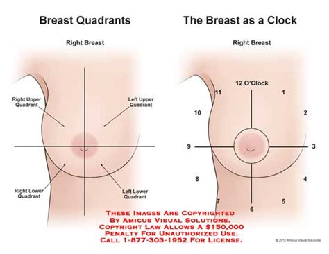 diagram of breast amicus illustration of amicus anatomy breast quadrant clock