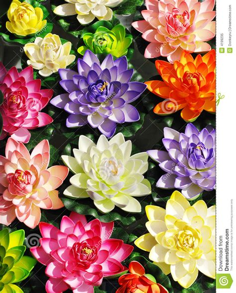 lotus colors colorful lotus flowers stock image image of flower