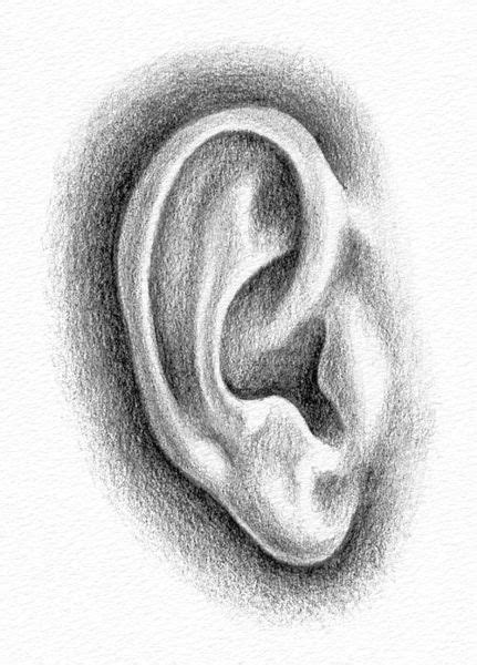 Drawing Ears by Pencil Portraits How To Draw An Ear