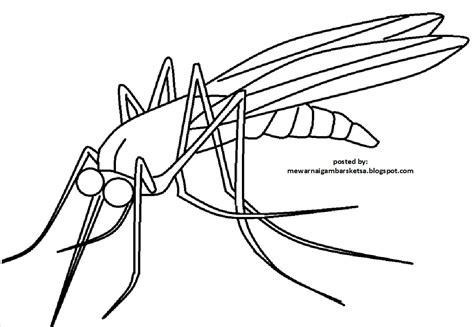 mewarnai gambar mewarnai gambar sketsa hewan nyamuk 1