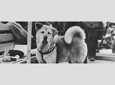 Loyal Dog Hachikō | True Story | Symbol Of Loyalty Hachiko Movie