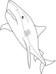 S Coloriage Imprimer Requin Blanc L L L L L L L L L