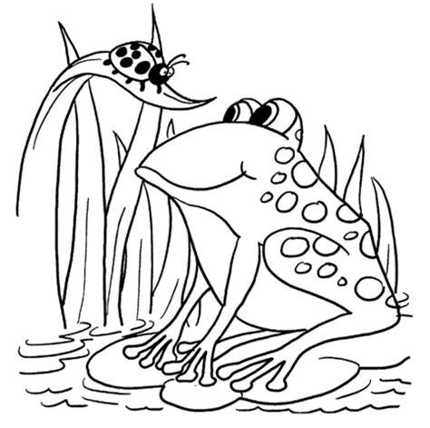 ausmalbild frosch und marienk 228 fer