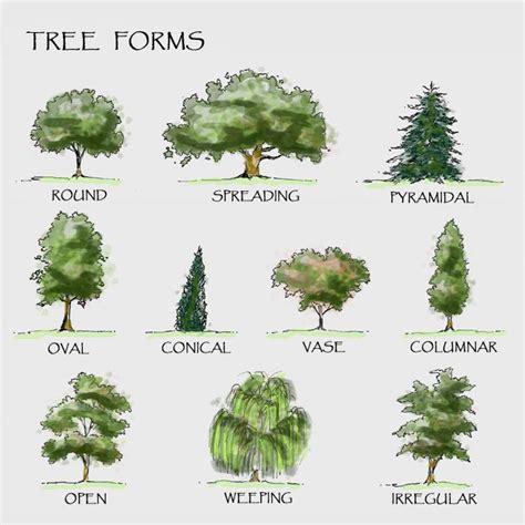 botanical trees tree types 1 landscaping pinterest drawn shrub different tree pencil and in color drawn