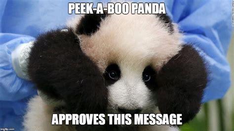 Cute Panda Memes - cute panda imgflip