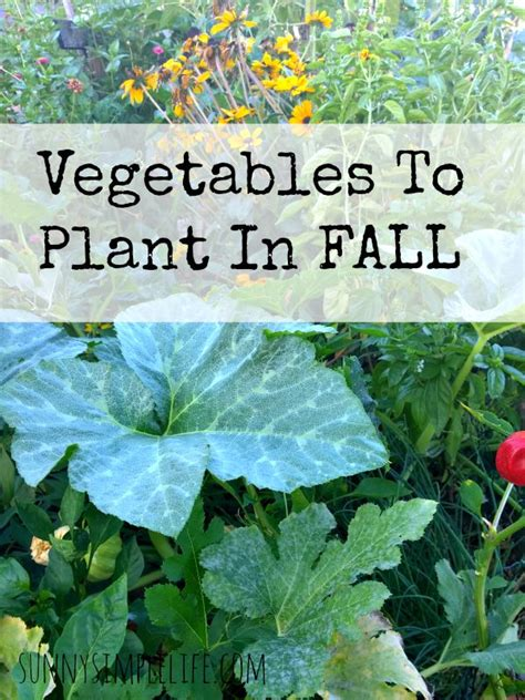 simple what vegetables to plant in the fall