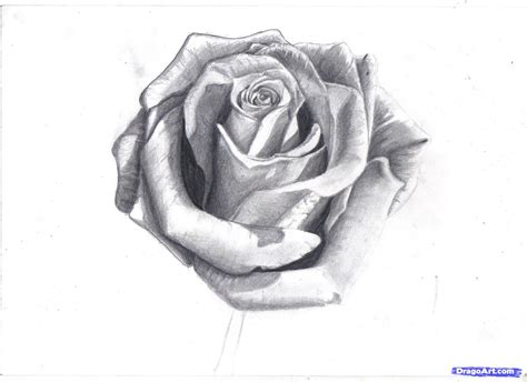 how to draw a tattoo rose step by step how to draw a in pencil draw a realistic step