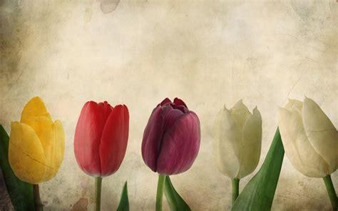 Tulips Vintage   Fondos de pantalla gratis para 1920x1200