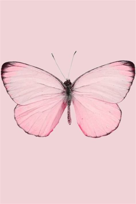 pink butterfly light light pale pastel pink butterfly moth insect nature iphone
