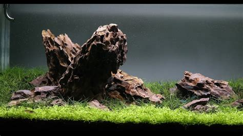 dragon stone aquascape dragon stone iwagumi aquascape day 26 youtube