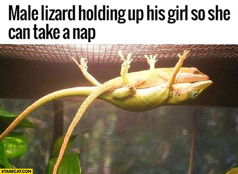 My Nap Friend Pic lizard holding up his so she can take a nap