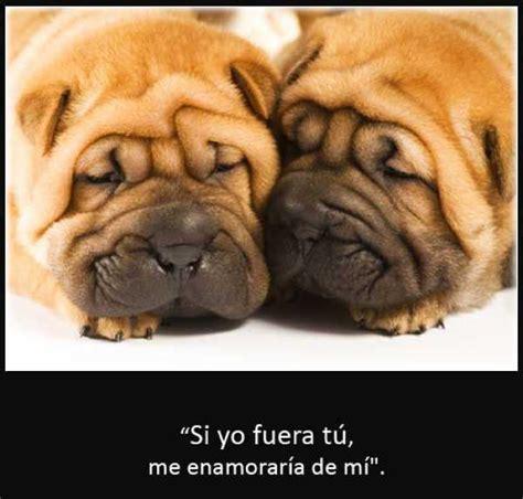 imagenes graciosas para whatsapp y facebook imagenes de perros con frases divertidas para whatsapp y
