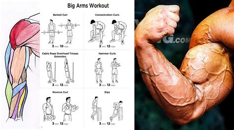 how to get bigger arms in three steps workout chart