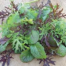 Bibit Pare Pahit benih paria hijau pare peria